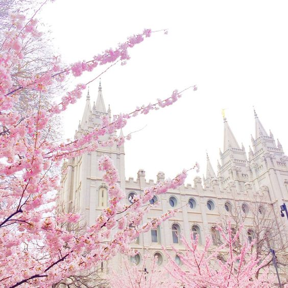 Salt Lake City Temple blossoms from Rachel Parcell